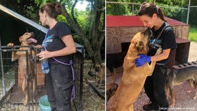 Group brings dogs saved by woman who kept them in her home during Hurricane Dorian to US shelters