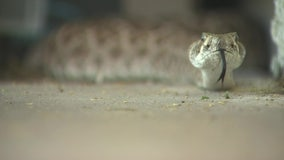 Warm Valley temperatures bring rattlesnakes back out