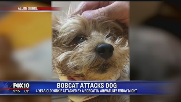 Close call: Family dog narrowly escapes bobcat attack