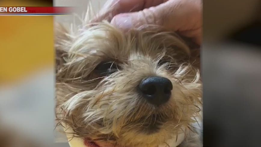 Close call: Family dog narrowly escapes bobcat attack