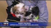 Puppy Palooza at Maricopa County Animal Care and Control