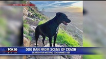 Search continues for dog after it ran from crash scene