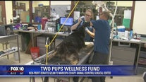 Community Cares: Two Pups Wellness Fund