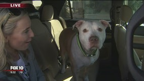 Uber becoming more pet-friendly