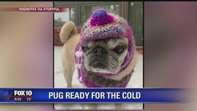 Pug dressed for winter as snow hits Colorado