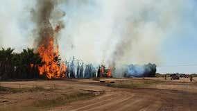 FD: Firefighters battle fire at palm tree farm in Casa Grande