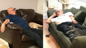 Volunteer 'honorary cat grandpa' visits shelter daily, brushes and naps with cats
