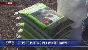 Steps to putting in a winter lawn