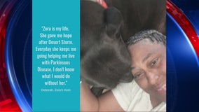 Desert Storm veteran seeks help funding dog's life-saving surgery