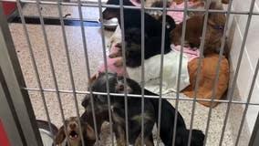 18 dogs, 67 birds seized in Arizona animal hoarding case