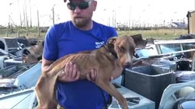 Emaciated dog found alive under debris 3 weeks after Hurricane Dorian