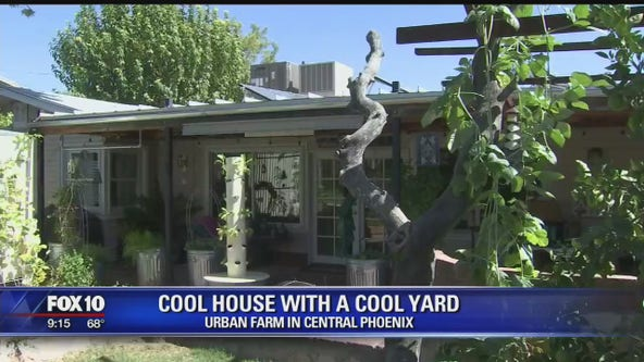 Cool House: Urban Farm in Central Phoenix