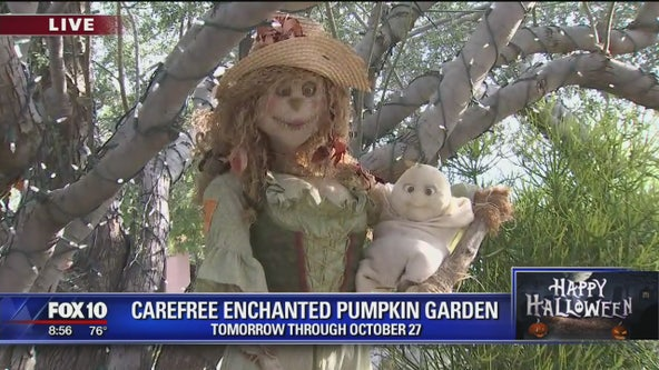 Cory's Corner: Carefree Enchanted Pumpkin Garden