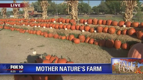 Cory's Corner: Mother Nature's Farm in Gilbert