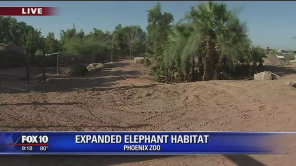 Behind-the-scenes of expanded elephant exhibit set to open at Phoenix Zoo
