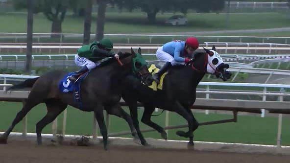 Another horse euthanized at Santa Anita Park; 34th since December