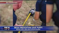 Mesa firefighters rescue puppy stuck in drain pipe
