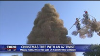 Annual tumbleweed tree goes up in downtown Chandler