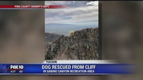 Dog rescued from edge of Sabino Canyon cliff in Tucson
