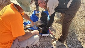 Dog dies after being rescued from Arizona mine shaft