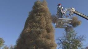 Crews begin building, decorating Chandler's iconic Tumbleweed Christmas Tree
