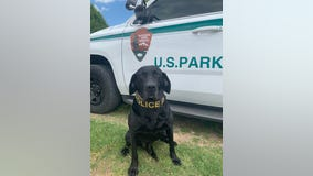 K9 officer retires after 56 'dog years' of service to National Park Service