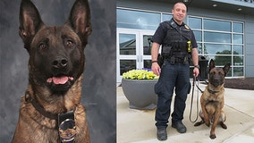 Indiana police dog fatally shot while chasing suspect in woods