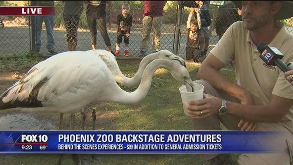 Phoenix Zoo's backstage adventures