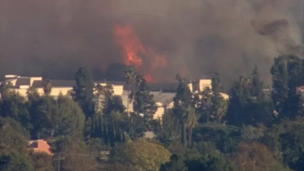 Firefighters stop forward progress of 'Barham Fire' burning in Hollywood Hills