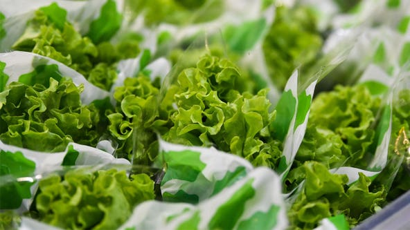 Nearly 100K pounds of salad items recalled because of possible E. coli contamination