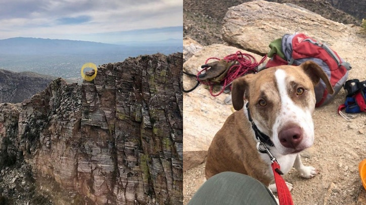 Dog rescued from edge of Sabino Canyon cliff in Tucson - FOX 10 News Phoenix