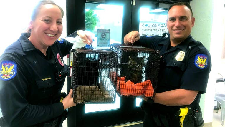 Photo of two Phoenix Police officers holding two cats, housed in two separate cages, after they were found soaked in gasoline