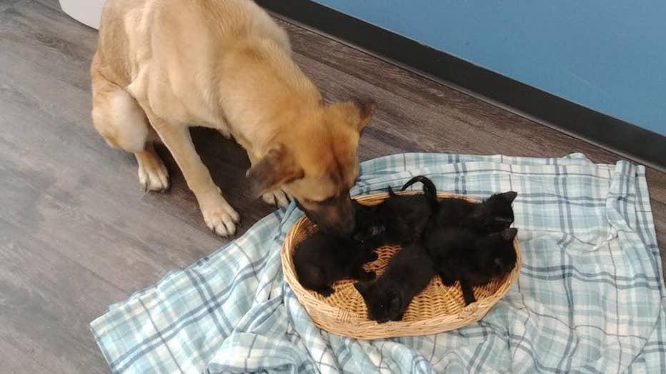 Dog-and-kittens2.jpg