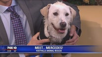 Pet of the Week: Meet Mercedes