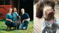 'Be aware': Owners issue heartbreaking warning after dog dies from consuming chewing gum