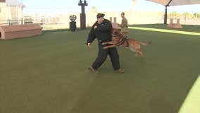 Top military dogs are learning important tricks at Luke Air Force Base