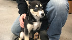 Puppy reported stolen at gunpoint in Prince George's County recovered, police say