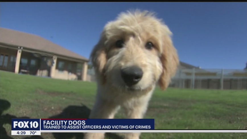 'Facility dogs' help bring relaxation to law enforcement agencies, victims of crimes