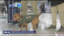 It could soon be tougher for support animals to get on flight
