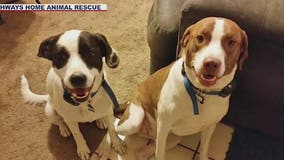 Valley animal rescue hopes to find forever homes for bonded pairs