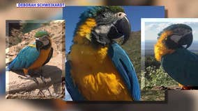 Flower, a macaw that went missing from South Phoenix, has reportedly been found