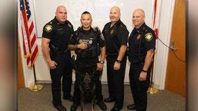 K9 Dobies celebrates retirement from Tarpon Springs Police Department