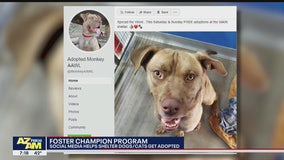 Local shelter using social media to help animals find forever homes