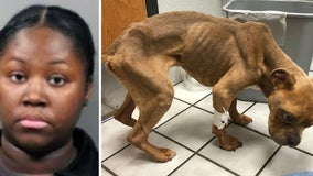 Woman arrested after emaciated dog found locked in kennel, placed in dumpster