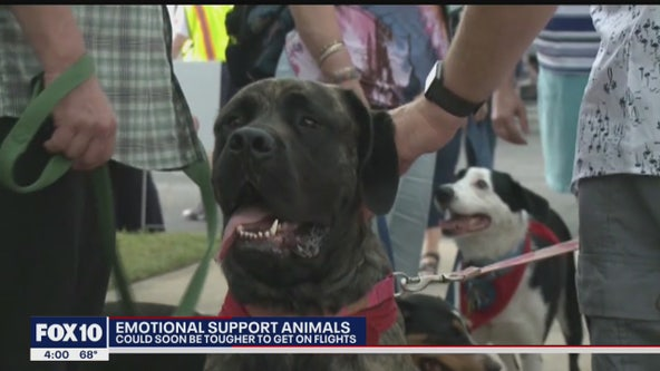 New policies coming to airlines for emotional support animals