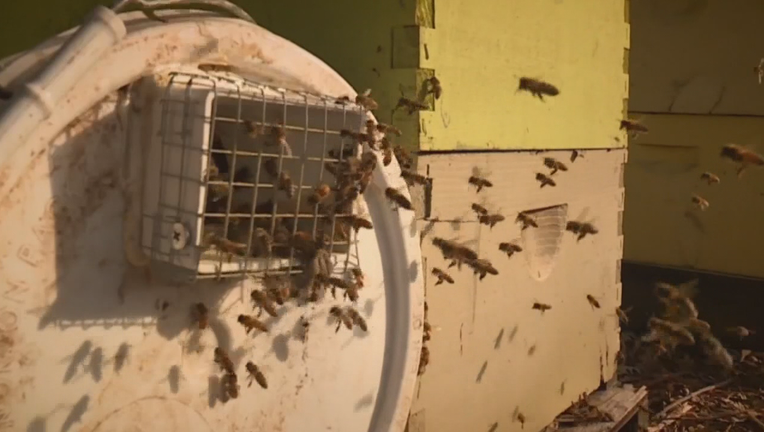 He estimated that the theft of the 92 hives, about a third of his operation, would cost him about $44,000 in revenue.