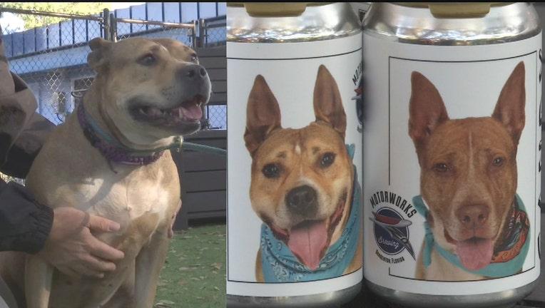 motorworks-adoptable-dogs.jpg