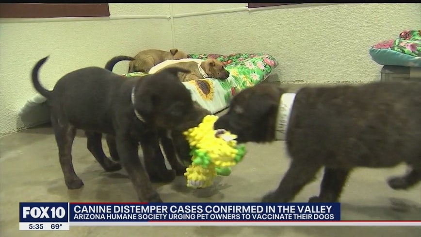 Arizona Humane Society: Several cases of distemper confirmed in the Valley