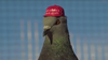 Prank group releases pigeons with MAGA hats over Democratic debate in Las Vegas