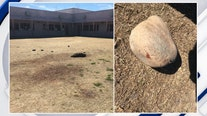 Reward offered in stoning death of javelina at Tucson school